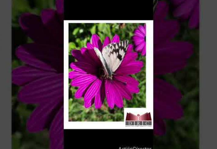 Embedded thumbnail for 5 de junio Día Mundial del Medioambiente